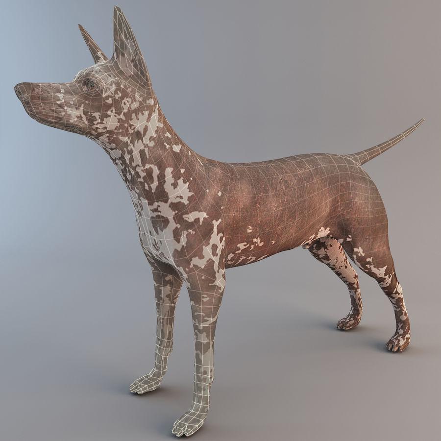 Meksikalı Tüysüz Köpek Xoloitzcuintli royalty-free 3d model - Preview no. 3