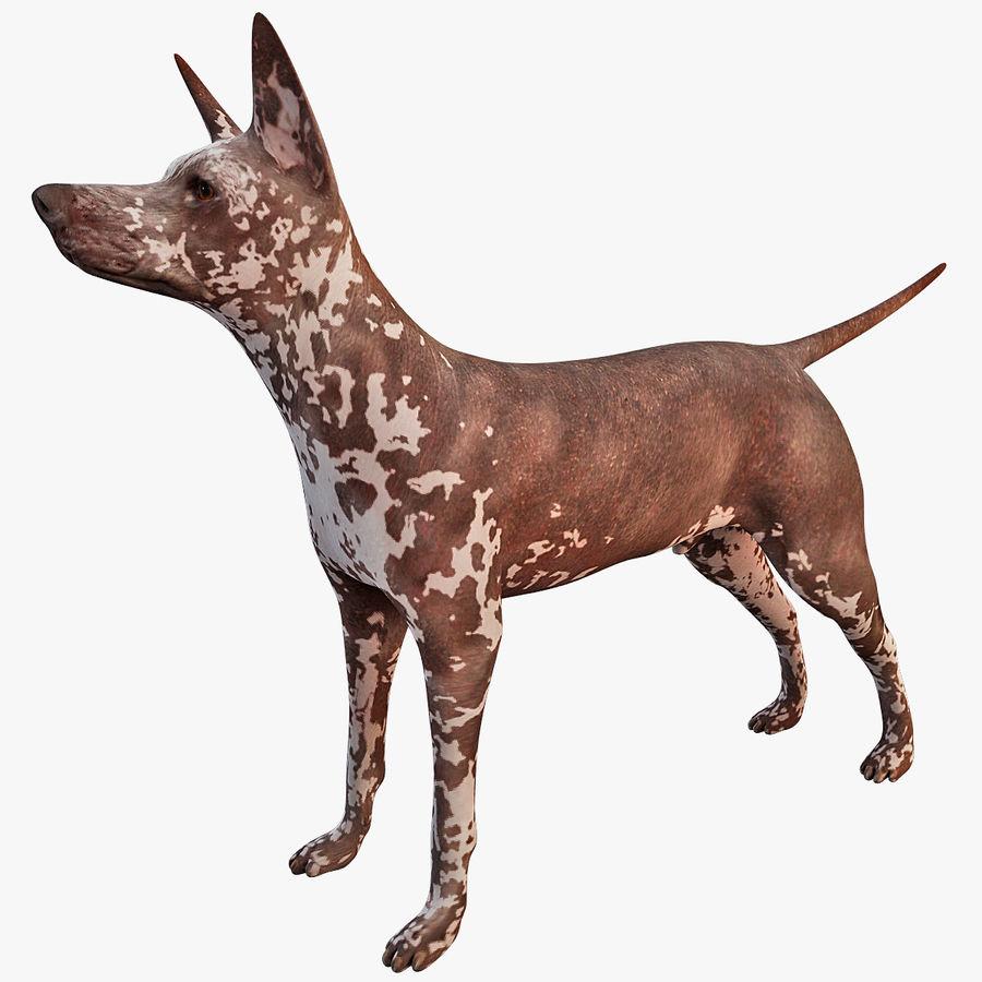 Meksikalı Tüysüz Köpek Xoloitzcuintli royalty-free 3d model - Preview no. 1