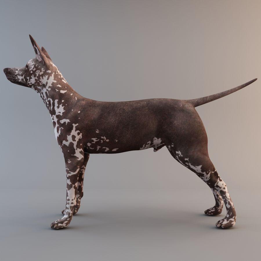 Meksikalı Tüysüz Köpek Xoloitzcuintli royalty-free 3d model - Preview no. 4