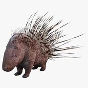 Indian Crested Porcupine 3d model