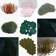 Collection de corail 3d model