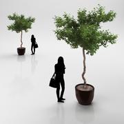 Träd i keramisk kruka 3d model