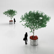 Träd i kruka 3d model