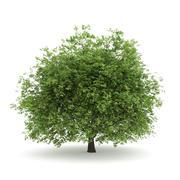 角树3.5M 3d model