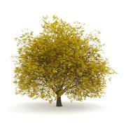 角树3.5M(秋天) 3d model