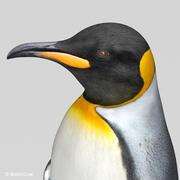 Król pingwinów 3d model