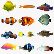 Aquarium Fish Collection 3d model