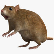 Поза Крысы 2 3d model