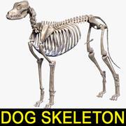 Szkielet psa z teksturą 3d model