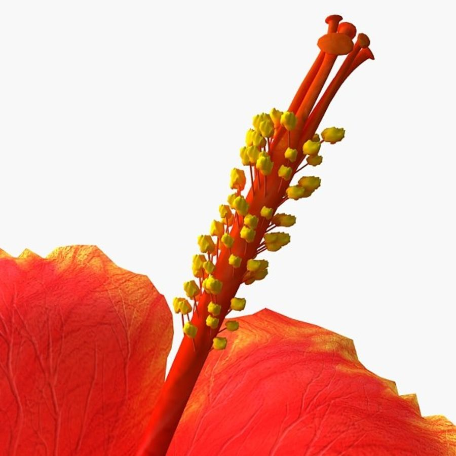 Hibiscus bloem royalty-free 3d model - Preview no. 4