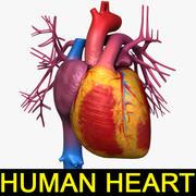 Ludzkie Serce Tex 3d model