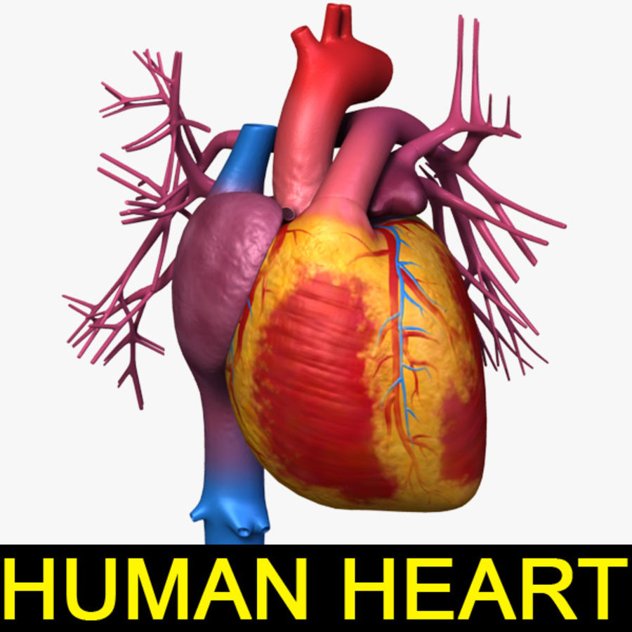 Human Heart Tex 3D Model $20 - .lwo - Free3D