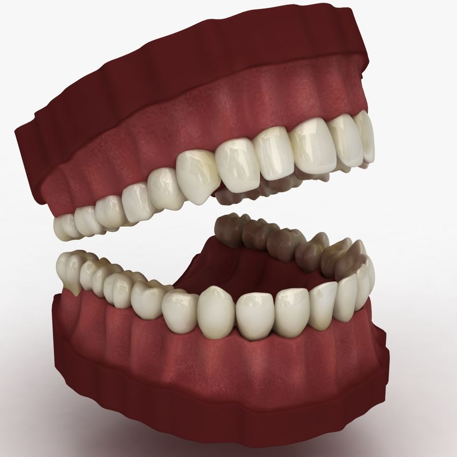 Teeth royalty-free 3d model - Preview no. 5
