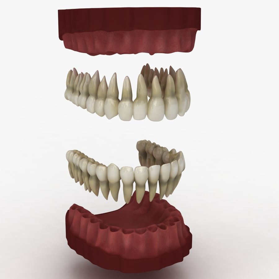 Teeth royalty-free 3d model - Preview no. 8