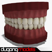 Zähne 3d model