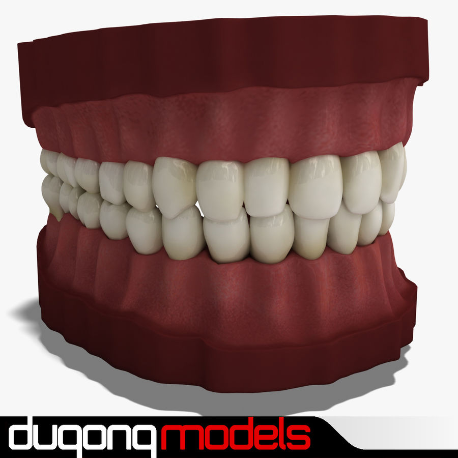 Teeth royalty-free 3d model - Preview no. 1