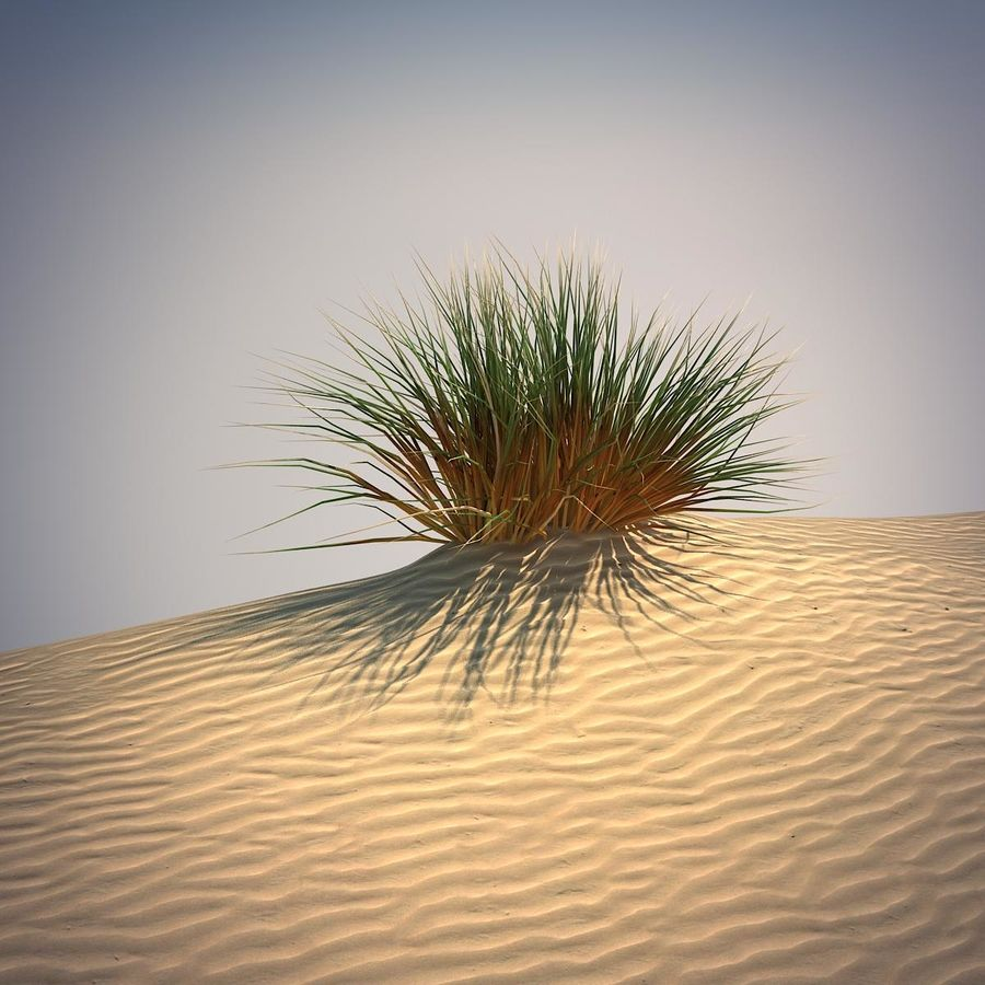 Desert Grass Set royalty-free 3d model - Preview no. 3