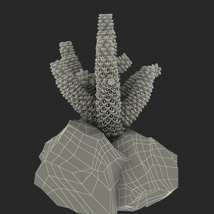 Coral royalty-free modelo 3d - Preview no. 13
