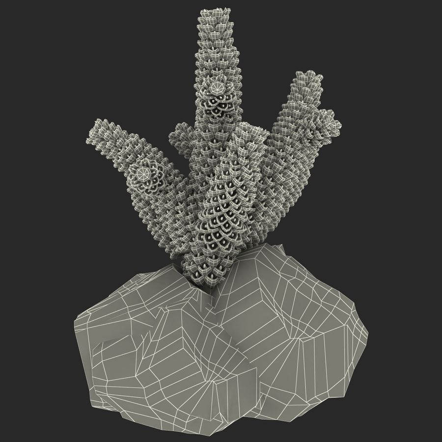 Coral royalty-free modelo 3d - Preview no. 11