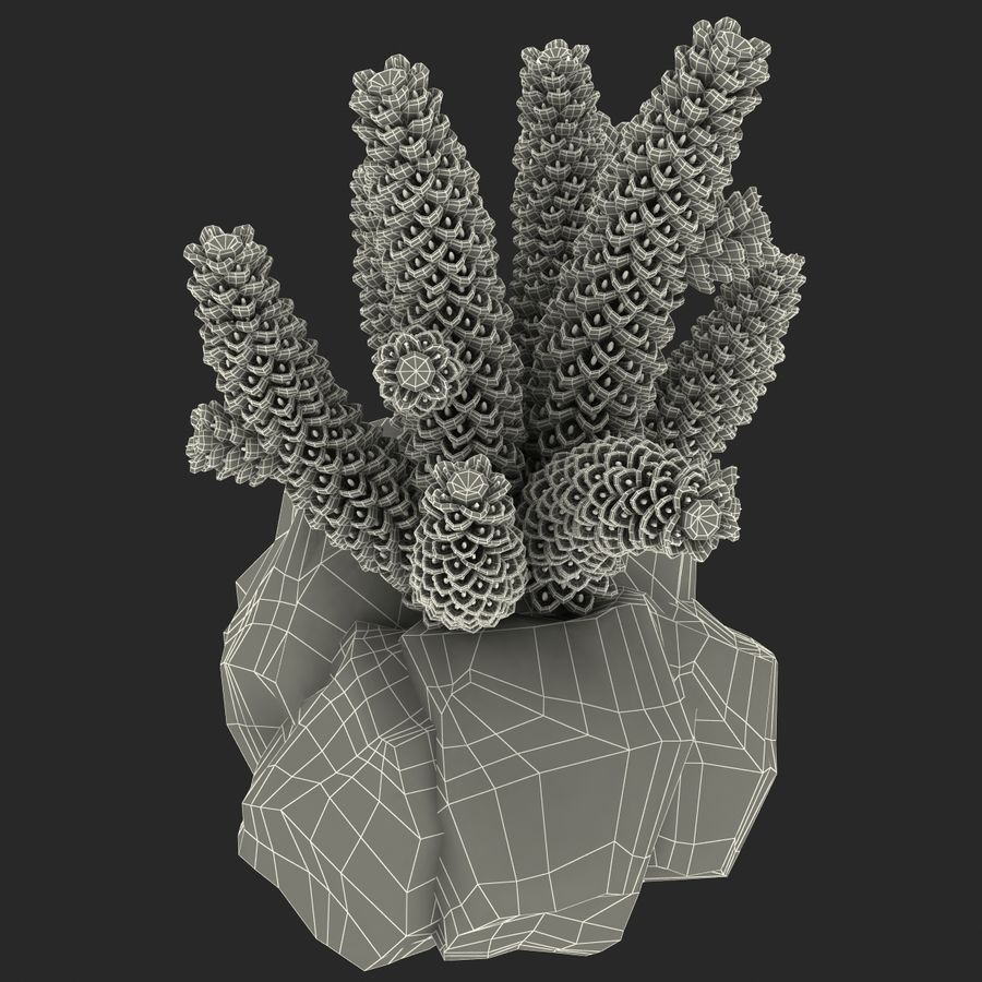 Coral royalty-free modelo 3d - Preview no. 16