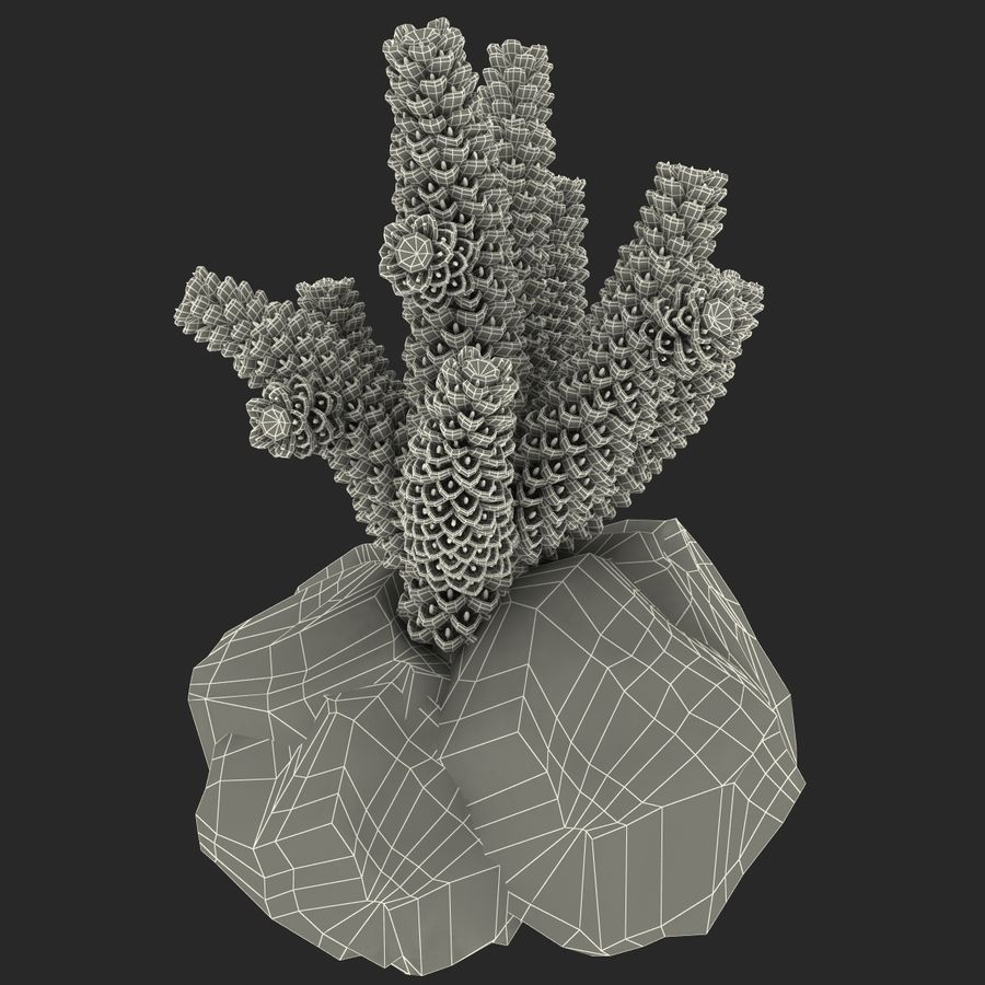 Coral royalty-free modelo 3d - Preview no. 10