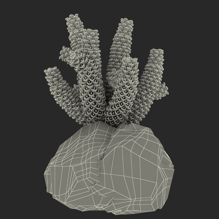 Coral royalty-free modelo 3d - Preview no. 12