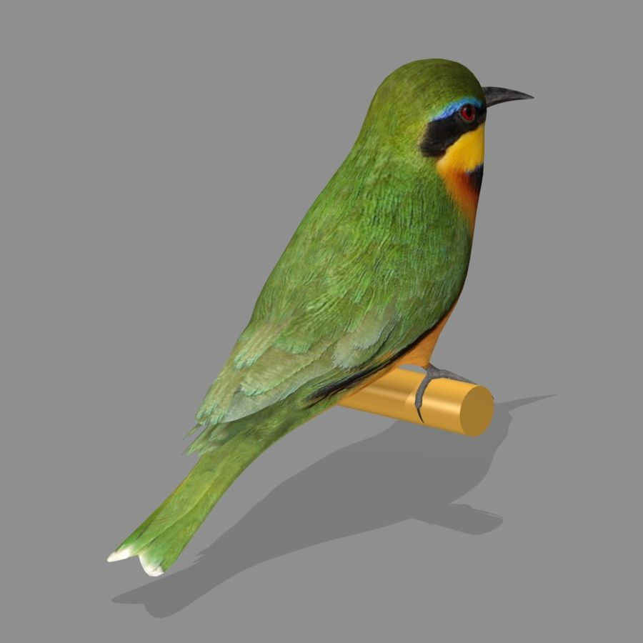 AB Little Bee Eater SA royalty-free 3d model - Preview no. 2