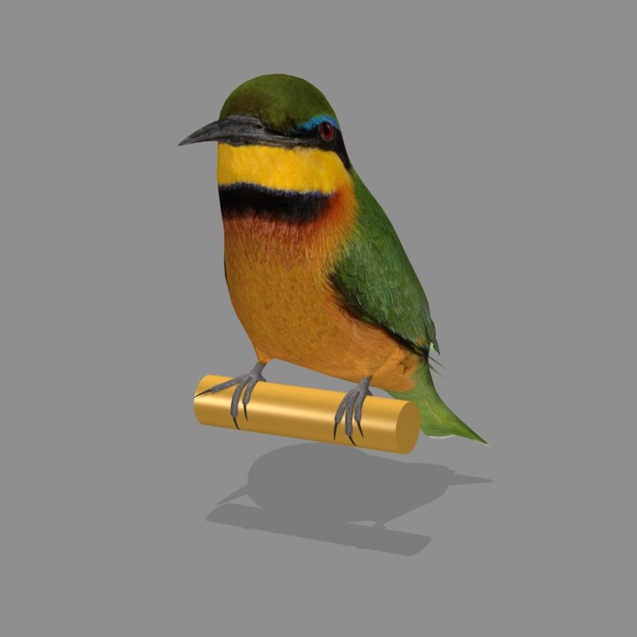 AB Little Bee Eater SA royalty-free 3d model - Preview no. 3