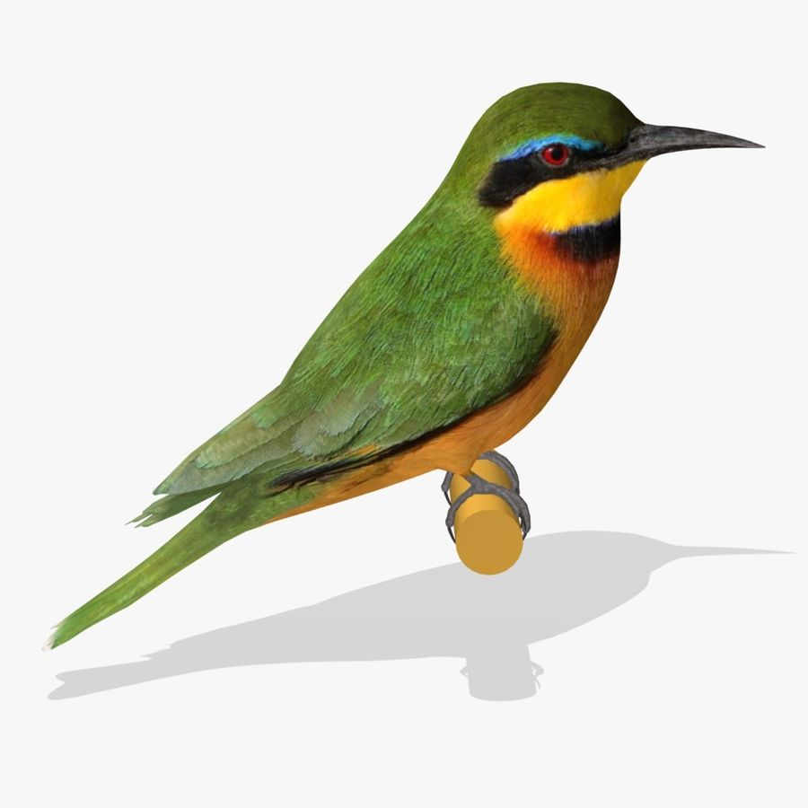 AB Little Bee Eater SA royalty-free 3d model - Preview no. 1