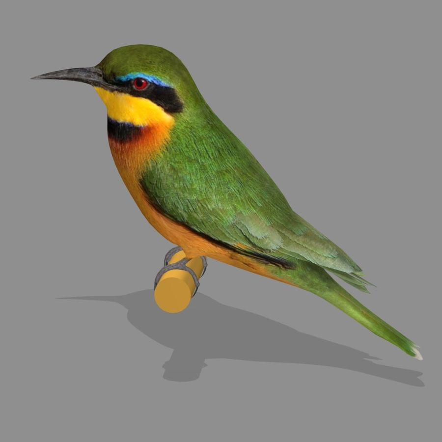 AB Little Bee Eater SA royalty-free 3d model - Preview no. 4