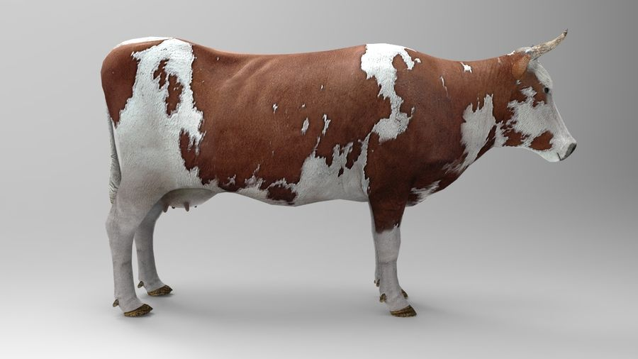 cow royalty-free 3d model - Preview no. 7