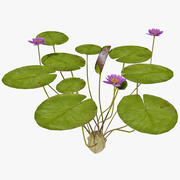 Water Lily 2 3d model