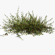 Low Forest Red Berries Fruit Leaves Bush Small Ground Level 3d model