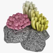 Conjunto de corales modelo 3d