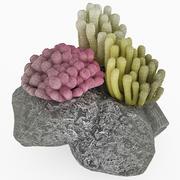 Corals Set 3d model