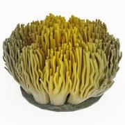サンゴ菌 3d model