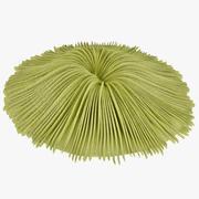 버섯 산호 2 3d model