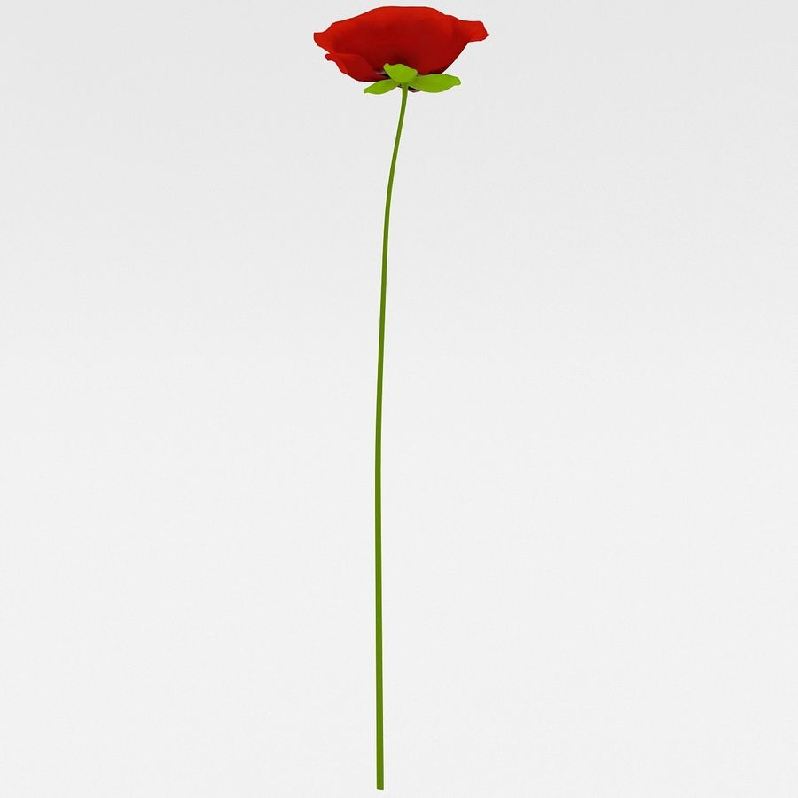 Red Poppy royalty-free 3d model - Preview no. 4