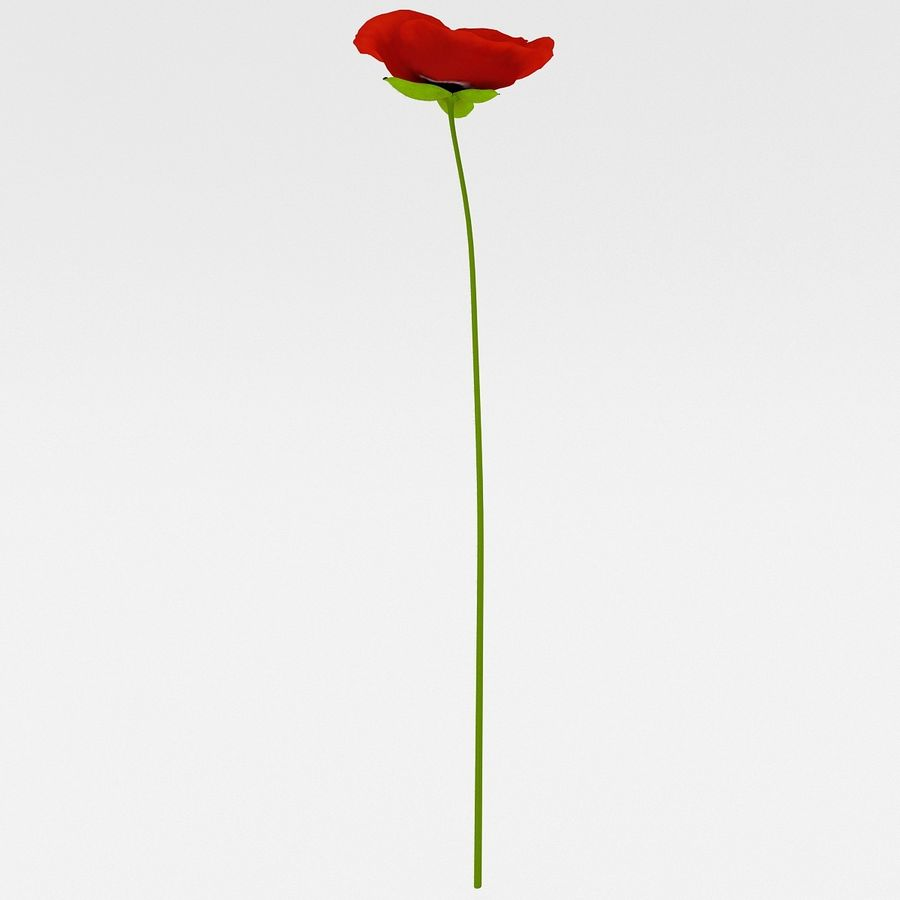 Red Poppy royalty-free 3d model - Preview no. 6