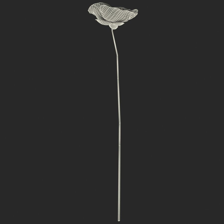 Red Poppy royalty-free 3d model - Preview no. 13