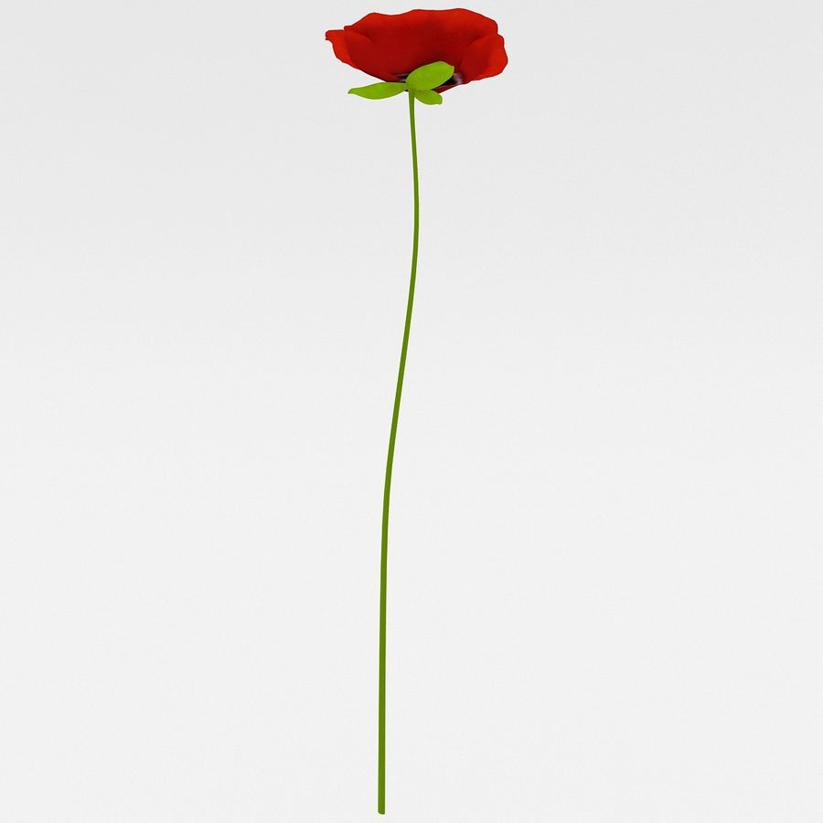 Red Poppy royalty-free 3d model - Preview no. 7