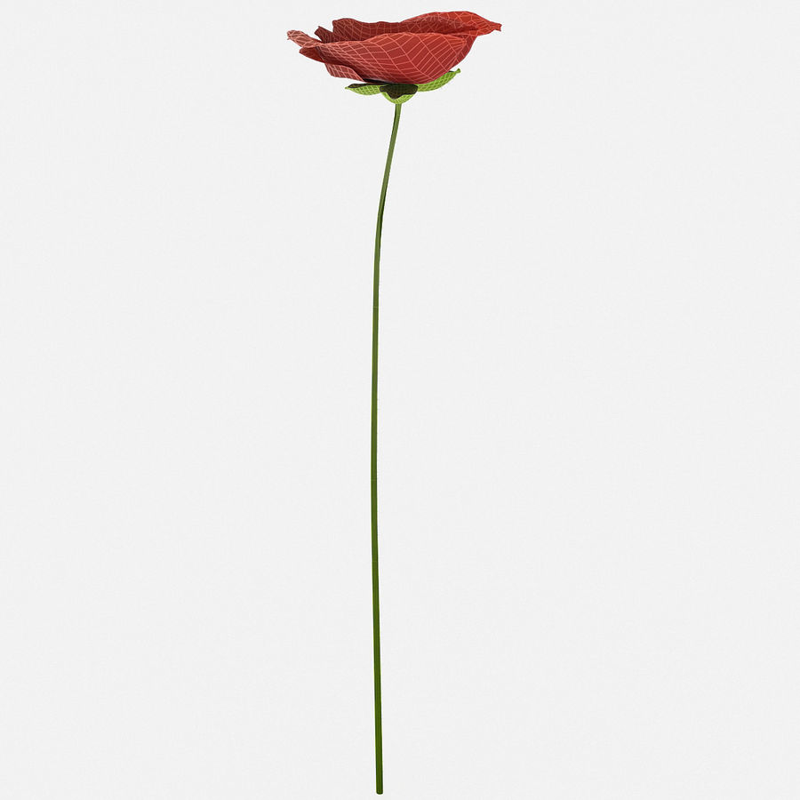 Red Poppy royalty-free 3d model - Preview no. 3