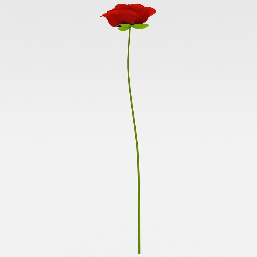 Red Poppy royalty-free 3d model - Preview no. 5