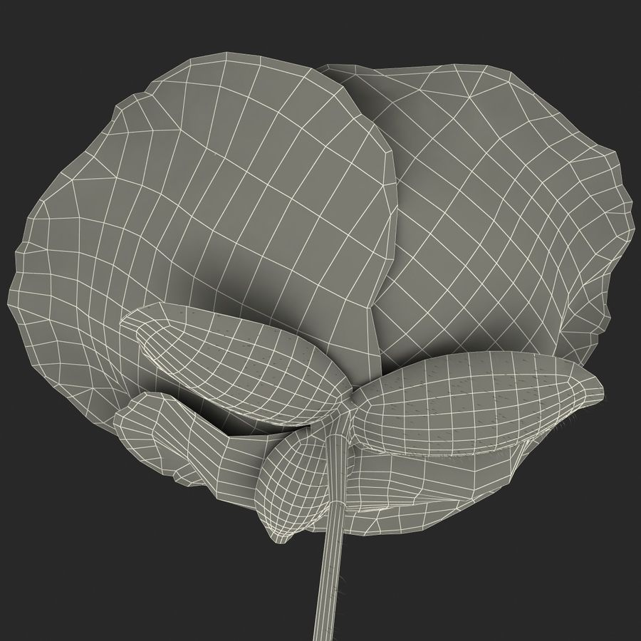 Red Poppy royalty-free 3d model - Preview no. 16