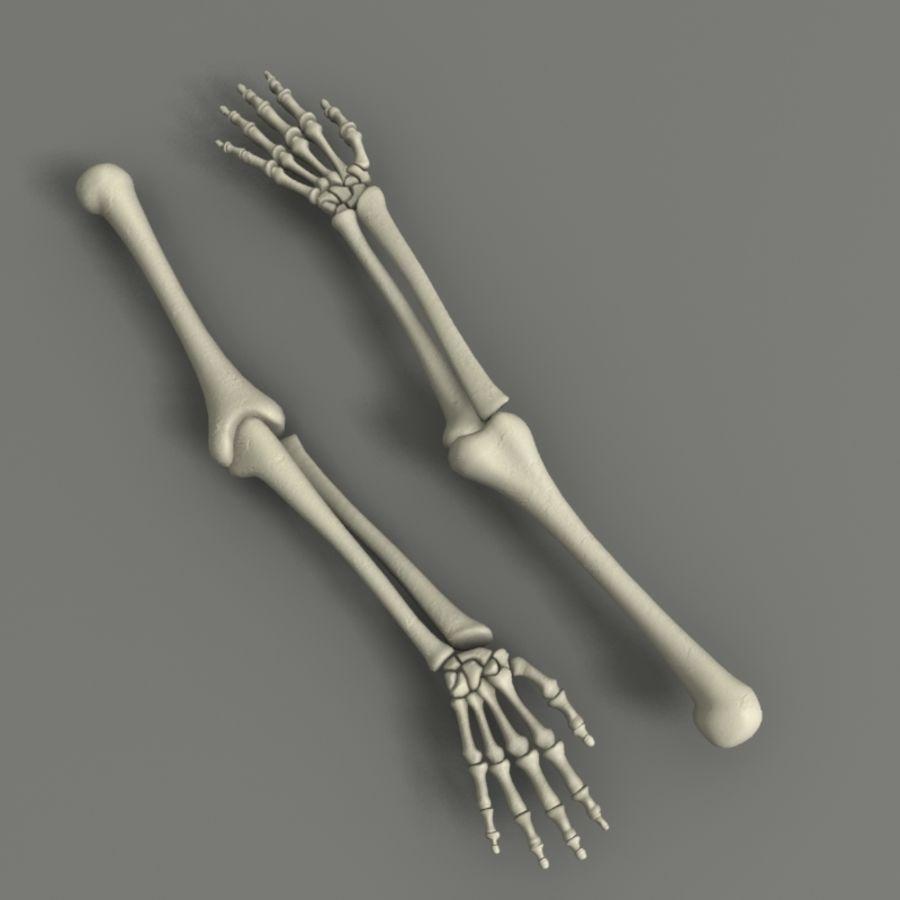 Ramię szkieletu royalty-free 3d model - Preview no. 5