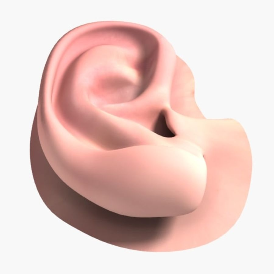 Oreille humaine royalty-free 3d model - Preview no. 5