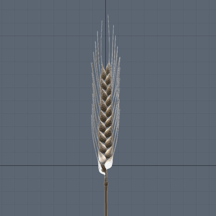 summer wheat royalty-free 3d model - Preview no. 6