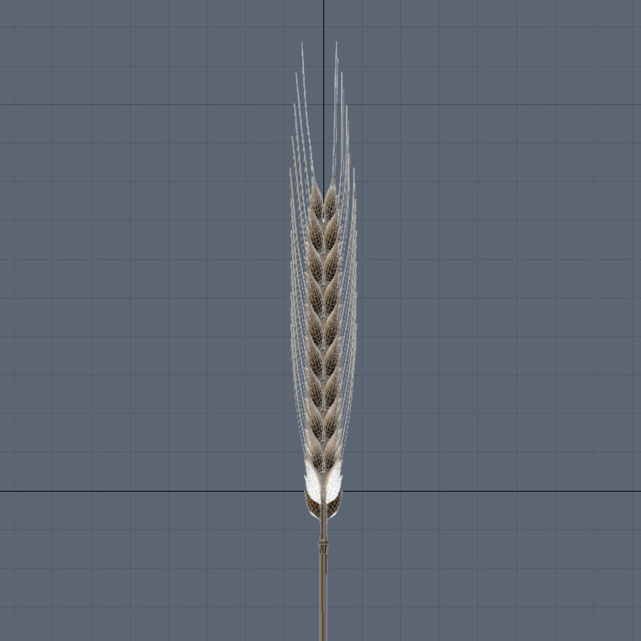 summer wheat royalty-free 3d model - Preview no. 7