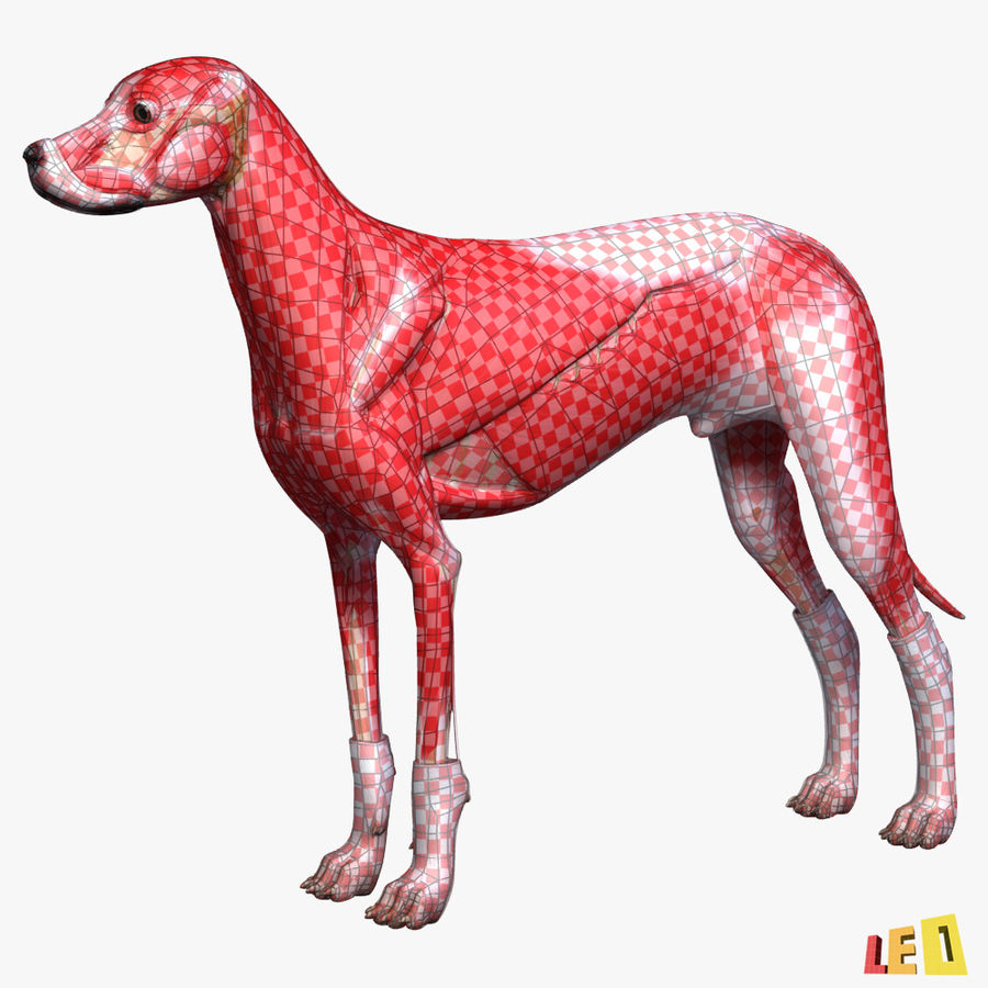 Musculature canine royalty-free 3d model - Preview no. 3