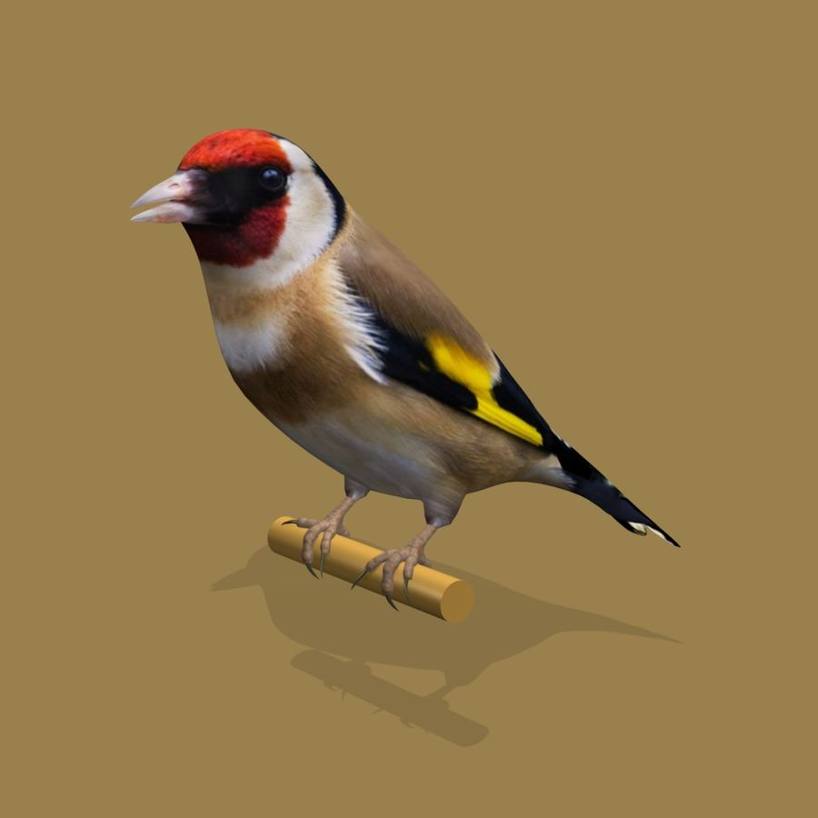 AB Goldfinch SA royalty-free 3d model - Preview no. 3